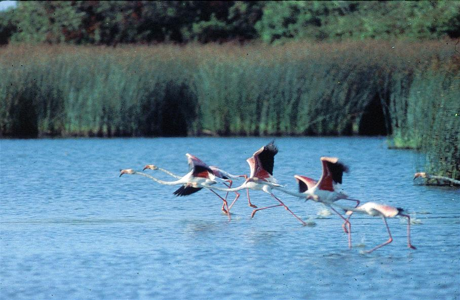 National Park of Doñana